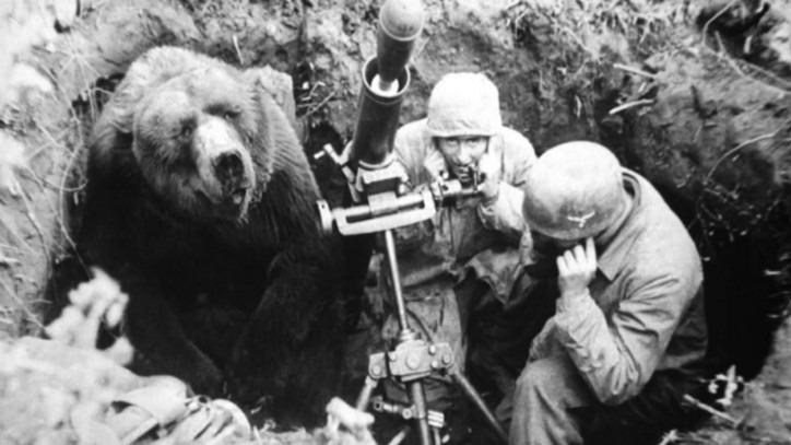 """Wojtek : l'unique """"ours soldat"""" sur les champs de bataille en 40 ! - Cultea"""
