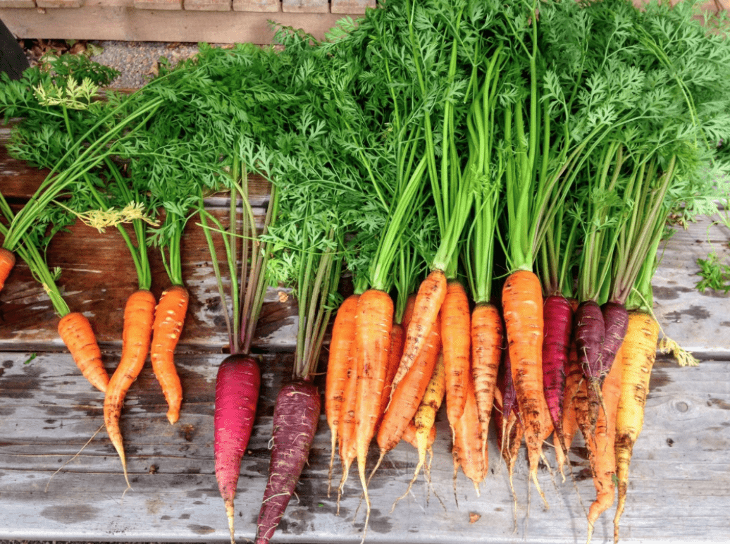 Les carottes améliorent la vision nocturne : une ruse pour tromper les Nazis ?