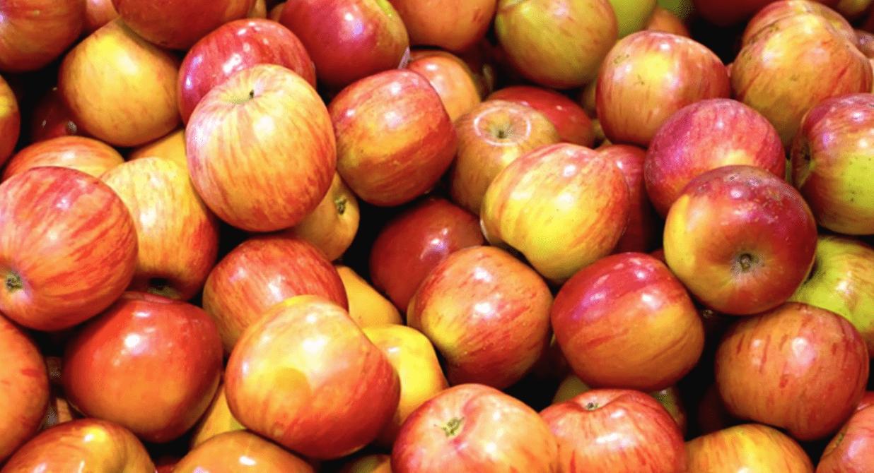 Tomber dans les pommes : d'où nous vient cette expression ?