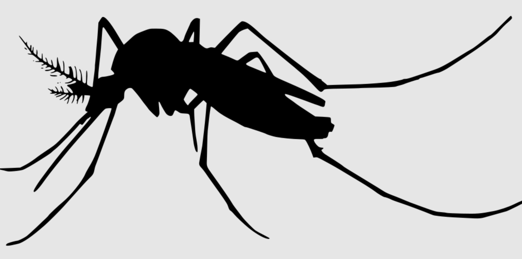 Est-ce que la lumière attire vraiment les moustiques ?