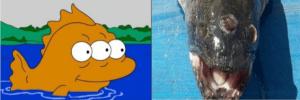 poisson 3 yeux simpson argentine - Cultea