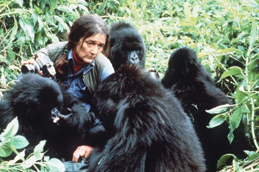 Dian Fossey, l'ange gardien des gorilles qui changea la société
